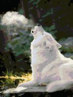 "Картина по номерам artmag 40*50 см ""Волк"" схема+краски+кисти К015 шт (+05152)"